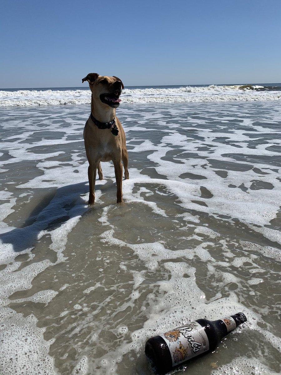 First time at the ocean @dog_feelings  #dogsoftwitter  #MyrtleBeach  #BestDayEver