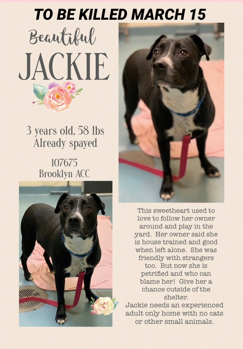 Sweet Jackie is to be killed🆘☎️⏰.   Watch ❤️👁      please apply   #rescue #pledge #foster #adopt #rescuedog #dogsoftwitter #nyc
