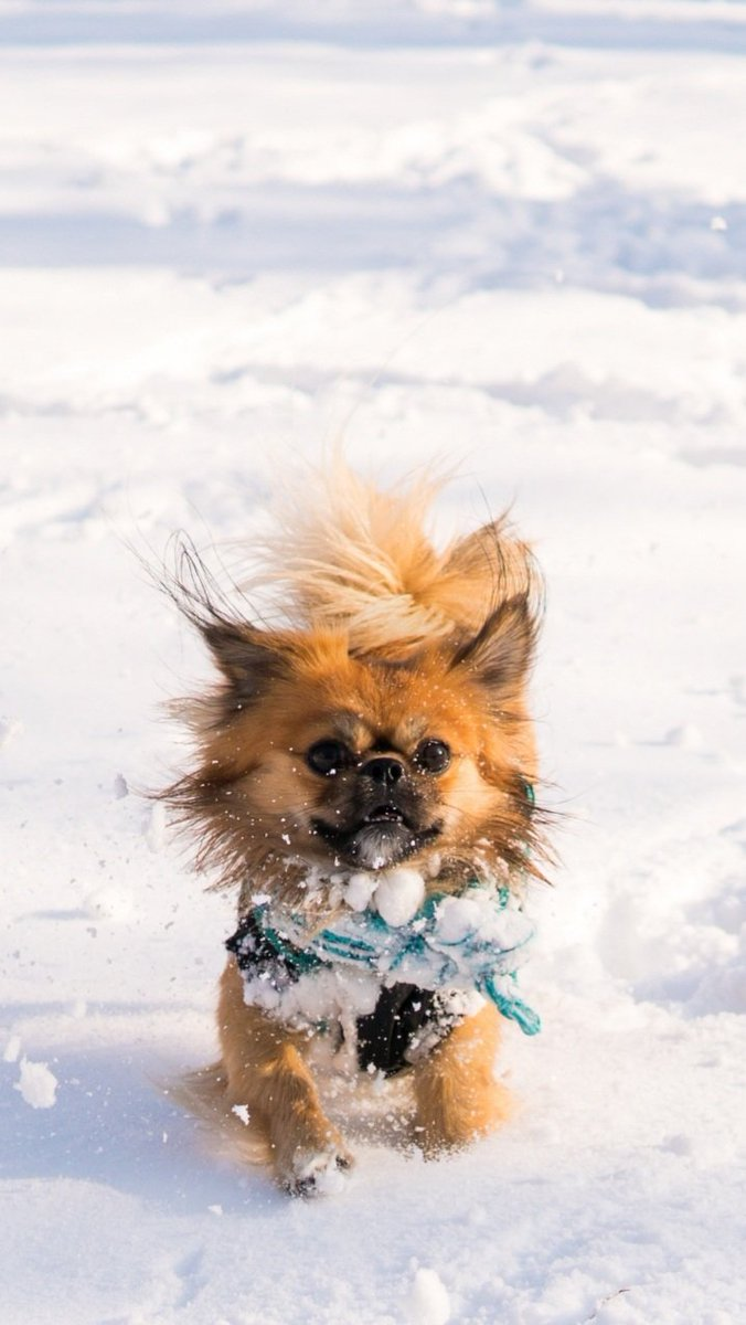 #dogsoftwitter #dogs #dogstyle #DogsLivesMatter #dogsarefamily #dogsarelove #dogslife #cutedogs #canine #dogplay #dogstyle #doggy #dogoftheday #dogfriendly #dogfriends #dogscorner #dogslife #dogmodels #dogsloverclub #dogsstory #dogpic