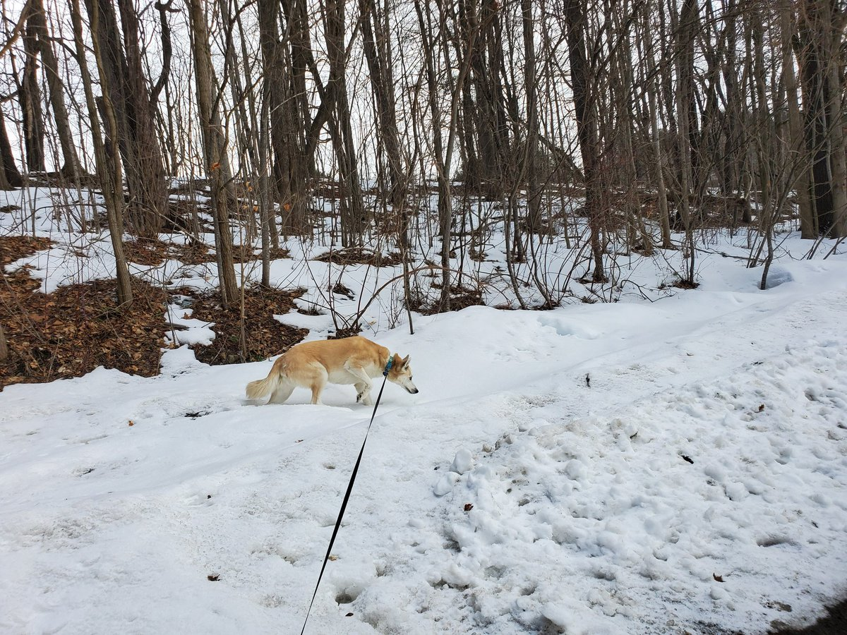 Take your time peeing, Ten. I'm enjoying the refreshing -7°F windchill here in my thin damn hoodie. #dogsoftwitter