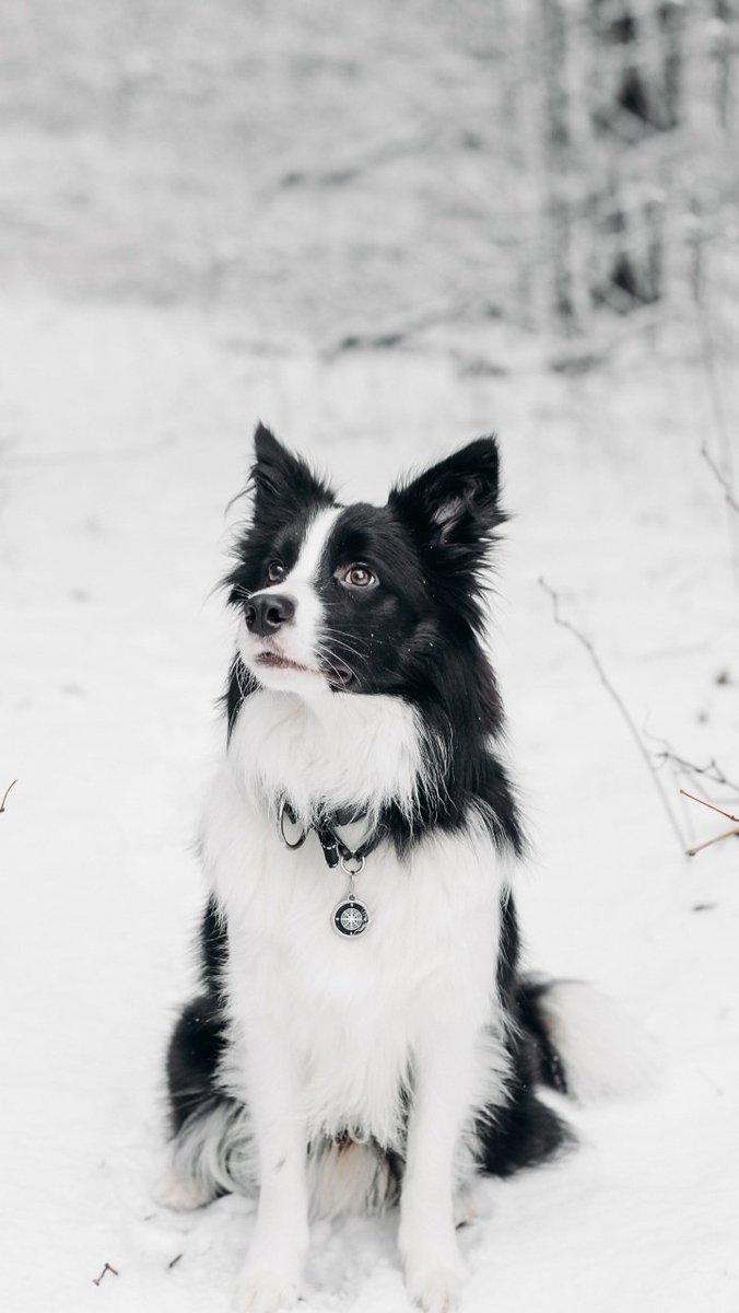 #dogsoftwitter #dogs #dogstyle #DogsLivesMatter #dogsarefamily #dogsarelove #dogslife #cutedogs #canine #dogplay #dogstyle #doggy #dogoftheday #dogfriendly #dogfriends #dogsdaily #dogscorner #dogslife #dogmodels #dogsloverclub #dogsstory
