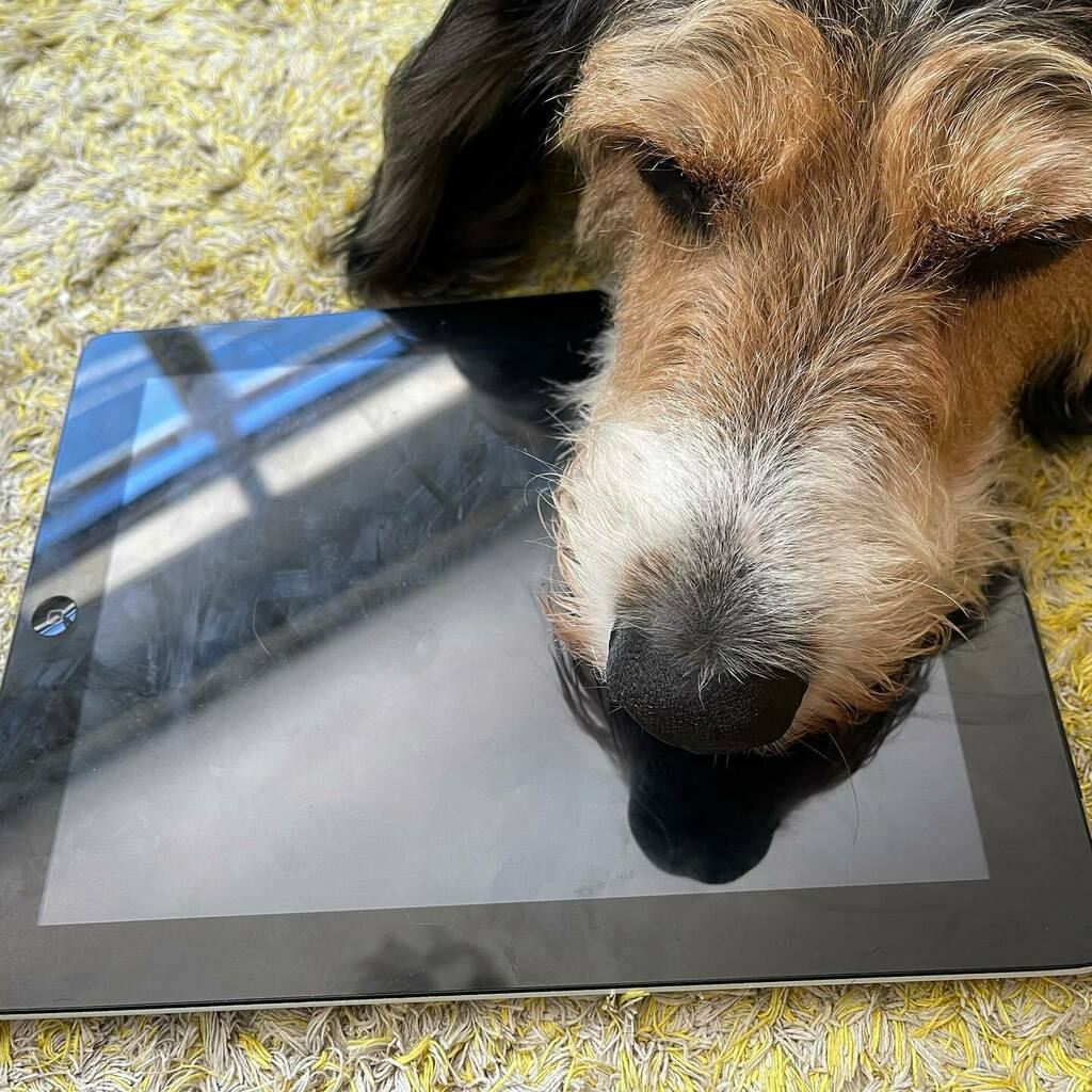 My tablet! #dogsofinstagram #dogs #dogsofinstaworld #dog #dogs_of_instagram #dogstagram #dogs_of_world #doglovers #dogoftheday #dog_features #catiororeflexivo