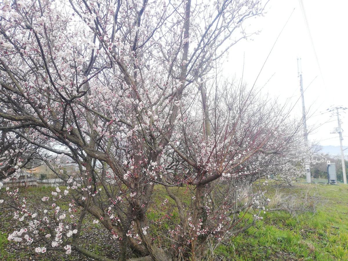 おはようございます 今朝の豊島はくもり 気温は12.7℃ 雨は上がりましたがスッキリしないお天気です 今日も一日がんばりますー #香川県 #地域おこし協力隊 #さぬきの輪 #土庄町 #小豆島 #豊島 #tetotanada #mosT #shodoshima #teshima https://t.co/0zvlQkYqwD