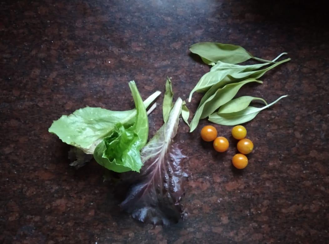 Adding lettuce, cinnamon basil and cherry tomatoes to the mix! . . #harvest #terracegarden #growyourown #GoGreen #greenindiachallenge