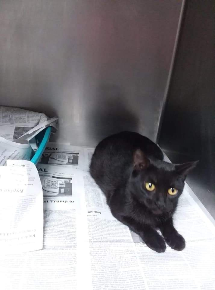 2 year old MISSY is at URGENT CATS OF #VERMILION #Louisiana #LA. Has only my shares as yet 😔