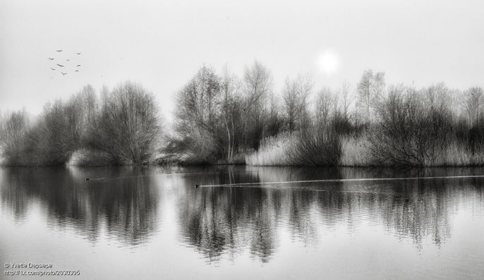 'Spring is in the air' by Yvette Depaepe #blackwhite #blackandwhite #blackandwhitepics #blackandwhitephotography #bw #bn #bianc #photooftheday  #photographer #EspinMc #photography