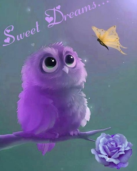 A dormir linda noche 😴😴😴  #buho #buhos #owl #owls #nature #wildlife #animals #cute #animal #buenasnoches😘 #goodnight #goodvibes #boanoite #cute #night #life #amor #goodnight🌙 #dormirbien #dormir😴 #sueño #sleep #follow #followme #lindanoche🌙 #lindanoche #hastamañana