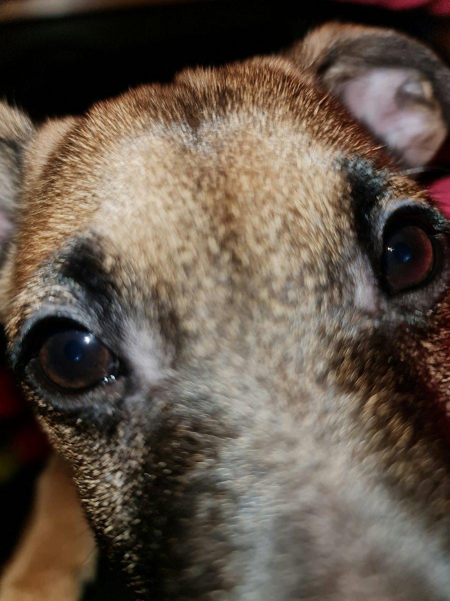 Puppy selfie.  Yay!  #DogsOfTwitter