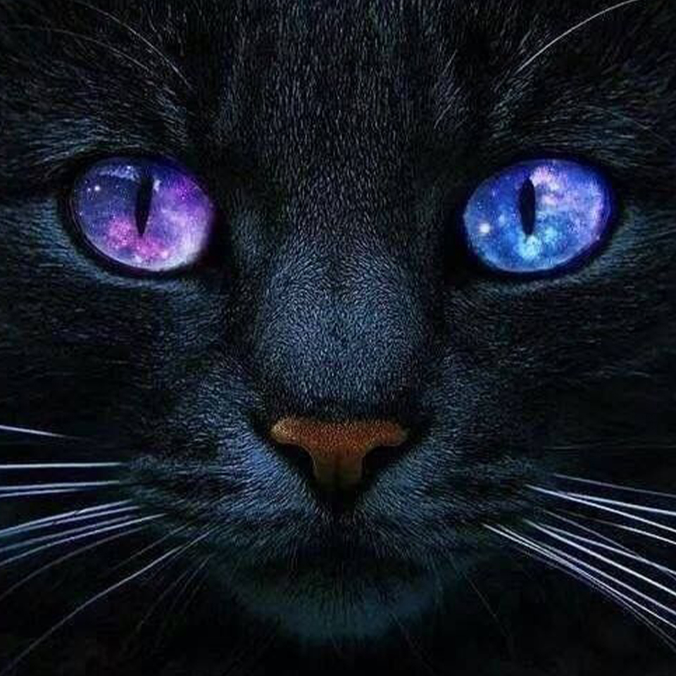 Cat Purring Healing Frequency ➤120Hz ➤ Relieve Axiety & Stress ➤ Humans & Cats Click here to enjoy the sound:  #cat #AnxietyMakesMe #anxietyrelief #catpurring