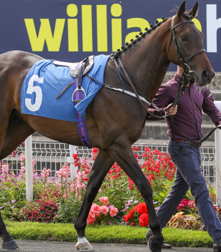 Galeophobia runs for @RichardFahey at Newcastle. Galeophobia is an abnormally large and persistent fear of sharks. He is owned by the Peniaphobia Partnership. Peniaphobia, an abnormal fear of poverty.