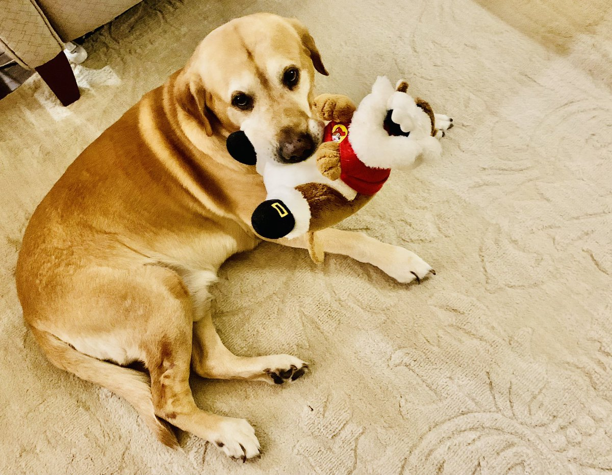 """Sparty and Santa Buc-ee say, """"Goodnight!""""   #DogsOfTwitter @bucees"""