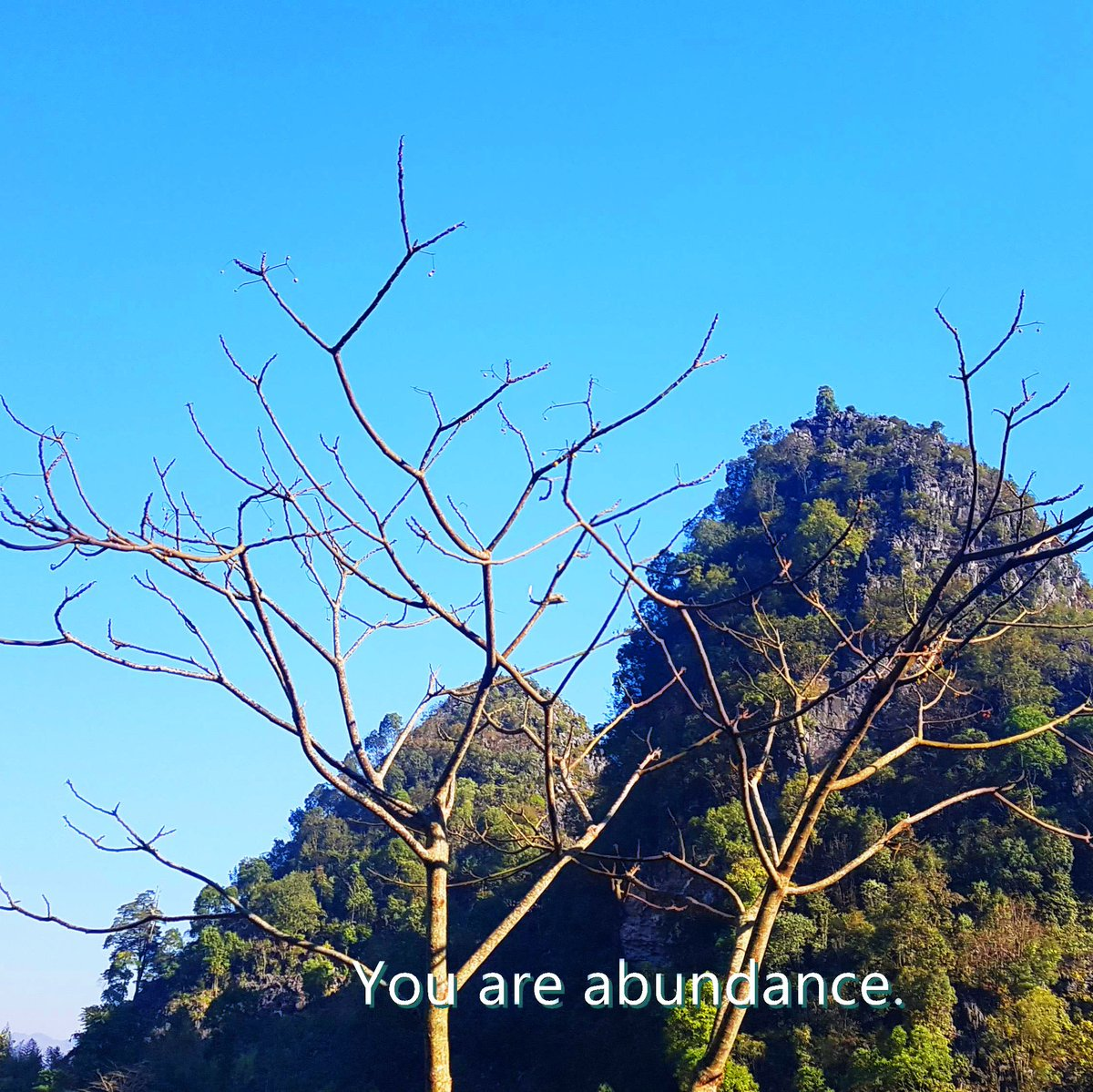 You are abundance.  🌺Follow for an affirmation a day🌺  #leaftree #leaftreeaffirmations #tree_perfection #raw_alltrees #total_trees #nature_seekers #wisdom #tree_pictures #landscapelovers #affirmation
