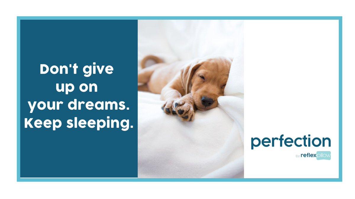 Does this sound like good advice to you?      #dogsoftwitter #FridayFeeling #EarlyBiz