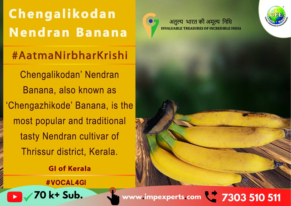 ये है #kerala #state के #most #exported केले !  If you want to Connect with #Farmers of this #Product then Simply Share your CONTACT Number in Comments now.  #chengalikodan #nendran #banana #Start #fruit #export #import #business #international #trading by #impexperts #GFE #Group https://t.co/t5sVNlY97S