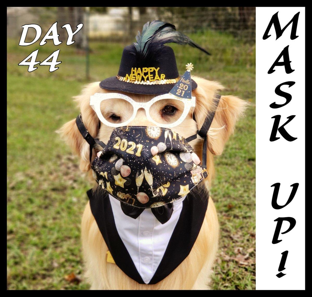 Day 44 of 100. Remember to😷#MaskUp!  🐶#ChampBiden #MajorAndChamp #Champ #Major #DOTUS #WhiteHouseDogs #BarkingForBiden @TheOvalPawffice @TheFirstDogs  #WearAMask #SocialDistancing #WashYourHands #AvoidCrowds #COVID19💉#vaccine🥜#foodallergies #servicedog🐕🦺#dogsoftwitter