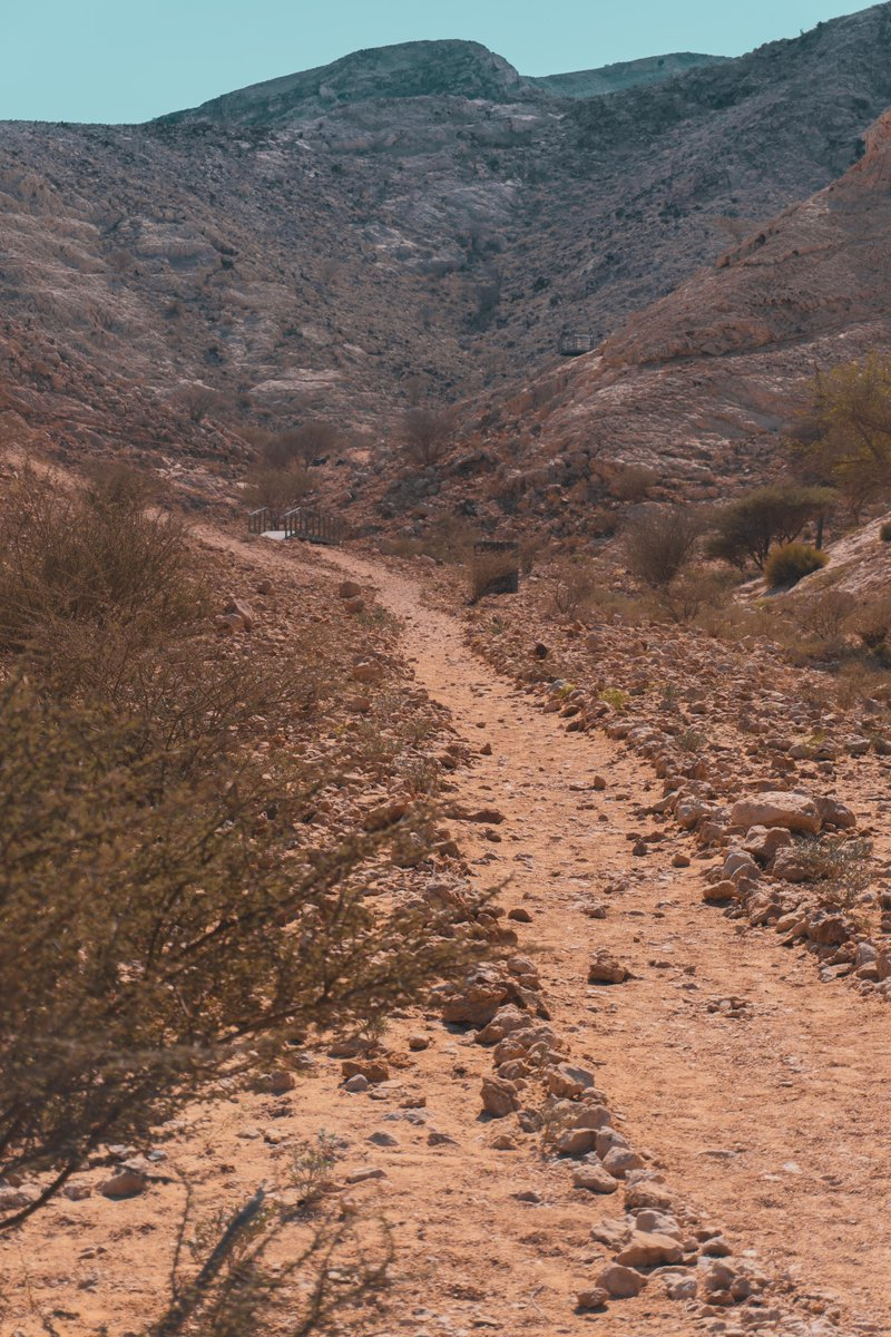 Trekking across Mleiha is easy, fun and suitable for all age groups. This path leads to the Wadi Caves - follow the guide! For general inquiries and bookings, please call us at +971 50 210 3780.  #الامارات #الشارقة #جوائز #سحب #ربح #UAE #Sharjah #mleiha