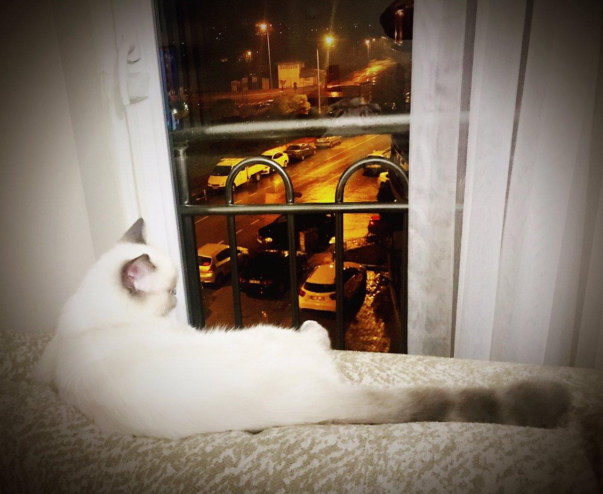 Ah şu Mart ayı :) #egsnow #kedi #cat #catsofinstagram  #fotograf #photography #instagood #photooftheday #instamood #iphonesia #tweegram #picoftheday #igers #instadaily  #instagramhub #igdaily #bestoftheday #happy #picstitch #instacool #motivation #youtube #kitten #kedi #kediler