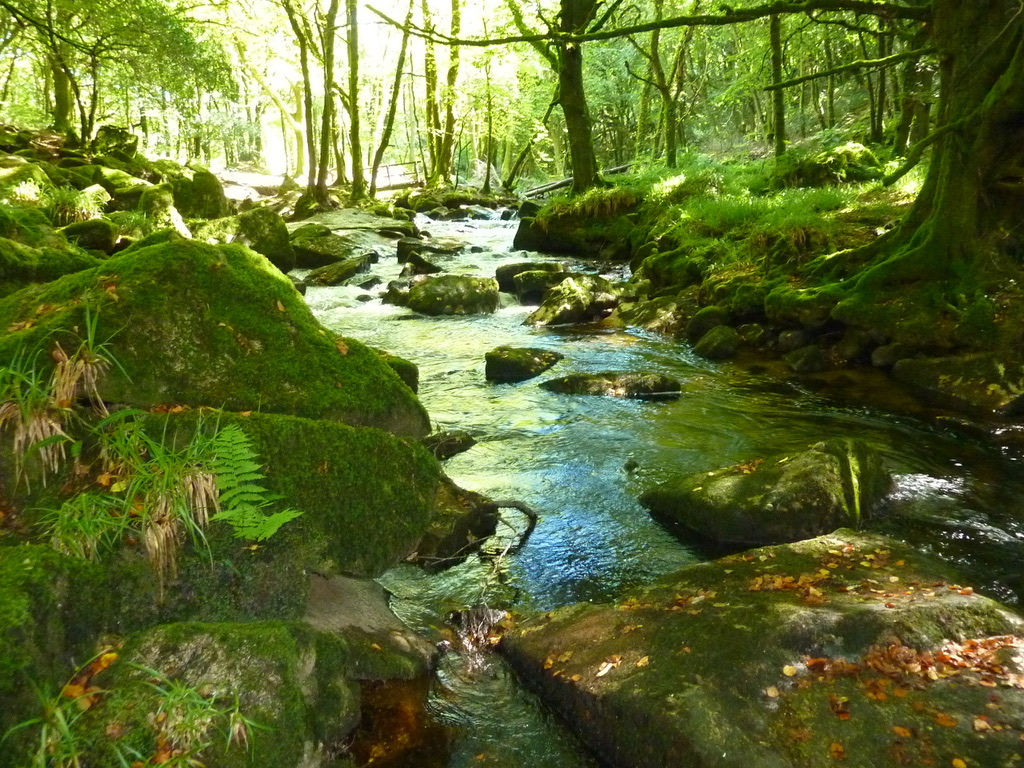 This leafy glade has a natural green hue, Where rocks covered in moss just grew and grew. With endless waterfalls and zig zag bends, Till the stream meets the River Fowey where its journey ends. #IansOriginalView #GolithaFalls #BodminMoor #Cornwall #Holidays #FrontLineWorkersCare