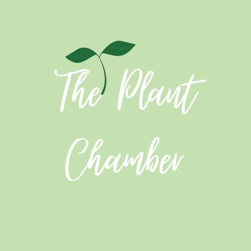 Hey everyone, I've finally decided to start my business because if not now, when? I sell beautifully handmade Macramé plant hangers at affordable prices so everyone's plants look cute af! Follow @theplantchamber on IG for more🌱💚