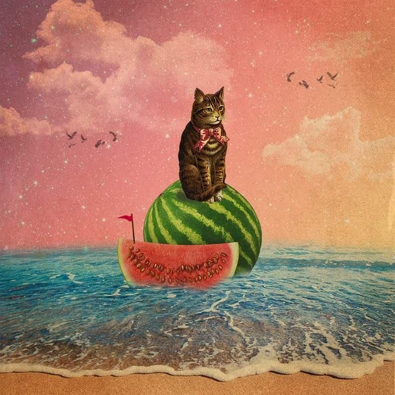 """Your Argument is Invalid""  #art #collage #cat #illustration #catart #watermelon #beach #ocean #sea #meme #catmeme #surreal #surrealism #ArtistOnTwitter #artist #commissionsopen #design #freelancer #digitalart #digitalcollage #photoshop #artwork #aesthetic #weirdart #collageart"