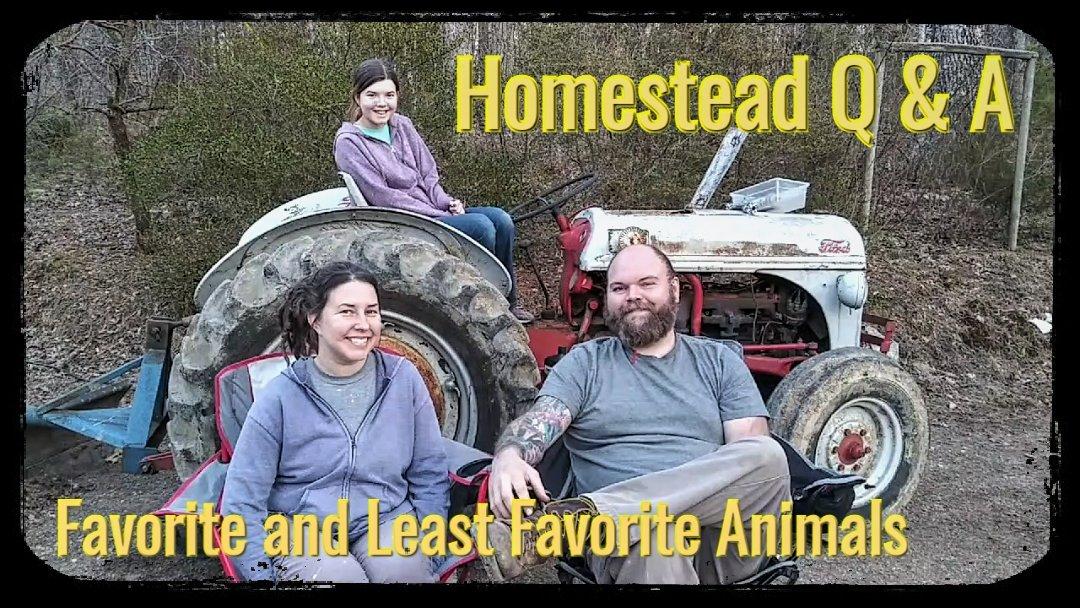 The latest vlog in our Homestead Q & A: our favorite and least favorite animals. What is your favorite/least favorite homestead animal?   #youtube #youtuber #animal #nature #homesteading #family #vlog #life
