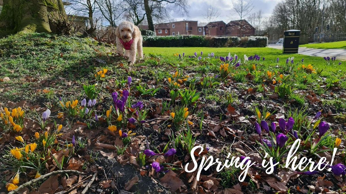 Have a lovely day - spring is almost here! #spring #flower #dog #sun