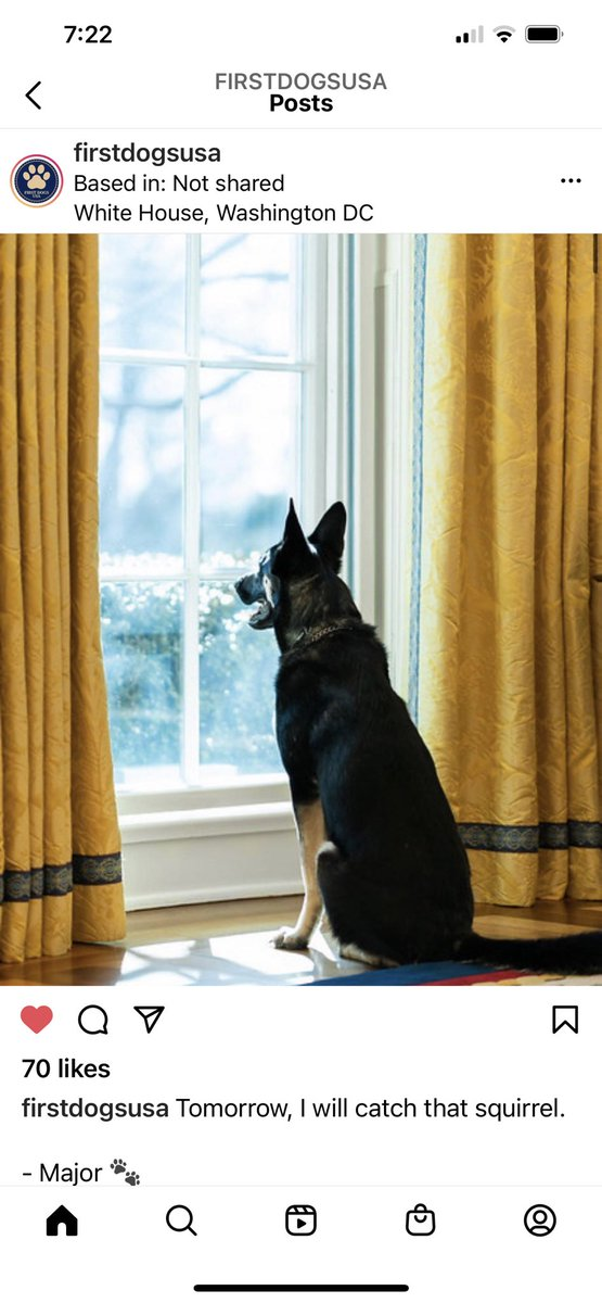 """Tomorrow I will catch that squirrel 🐿 "" #Major  #Firstdog #GermanShepherd"