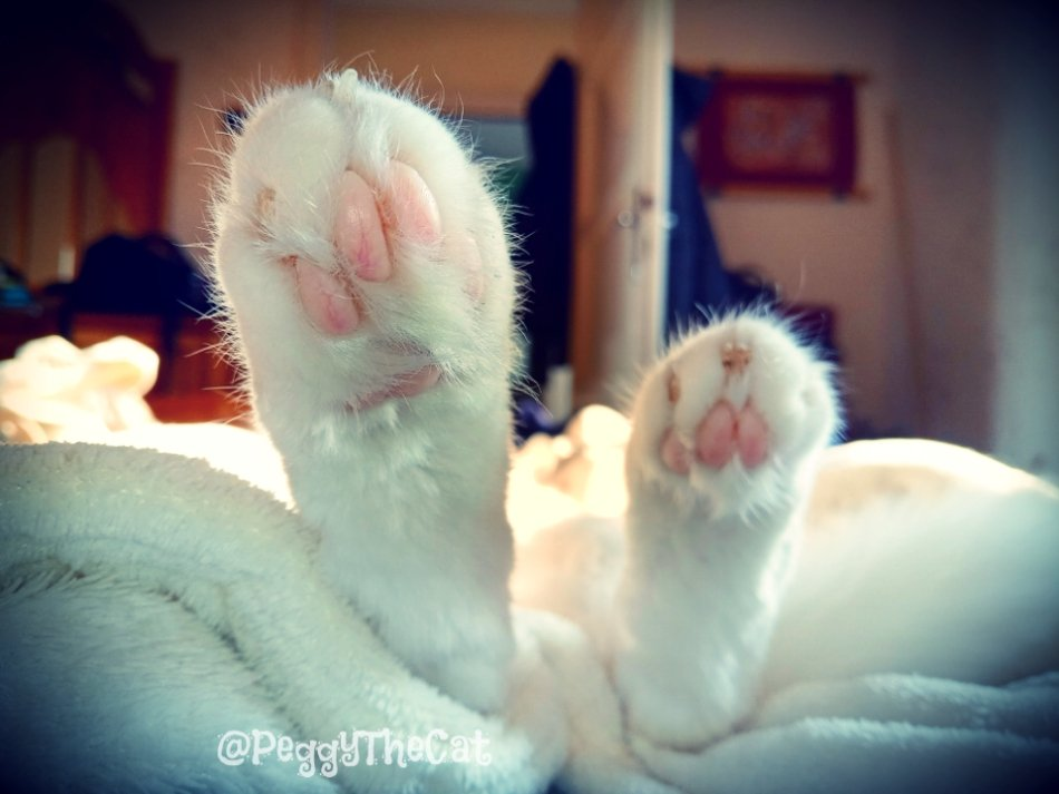 The weekend is here... time to relax! (Pretty much like every other day of the week, because I'm a cat! 😹)  #CatsOfTwitter #weekendvibes