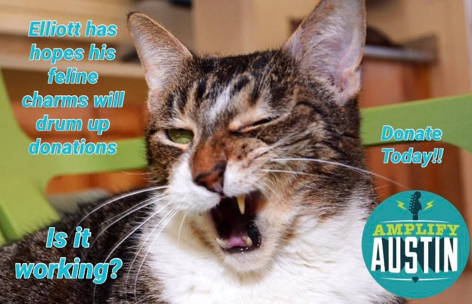 We are almost on the home stretch ! Can Elliott persuade you to donate?  #catsoftwitter #lovecats #catsrule
