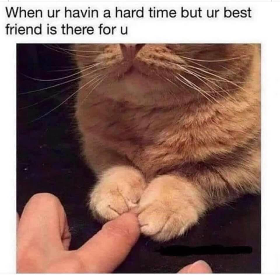 #CatsOfTwitter #cats #cat #catmemes #meow