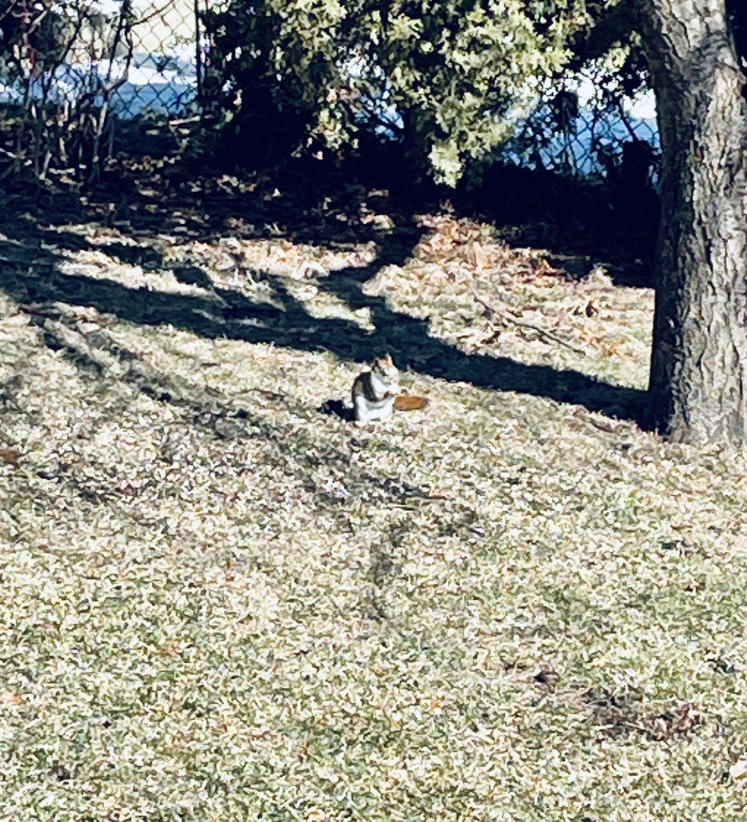 Little visitor #fridaymorning #FridayVibes