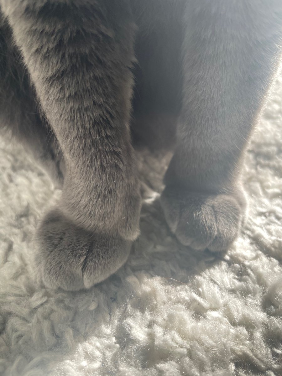 Me goofy mits 🐾 🏻🏻💖  #cats #catsoftwitter