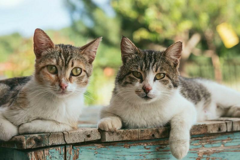 #FelineFanClub #CatsOfTwitter #cat
