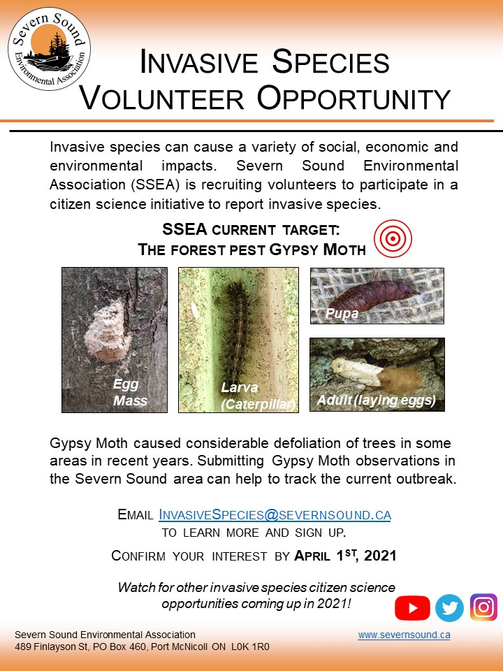 We are recruiting #volunteers to join our new #citizenscience initiative to report #invasivespecies. Our current focus is the forest pest #GypsyMoth🐛. Email InvasiveSpecies@SevernSound.ca for more info or to sign-up! #severnsound