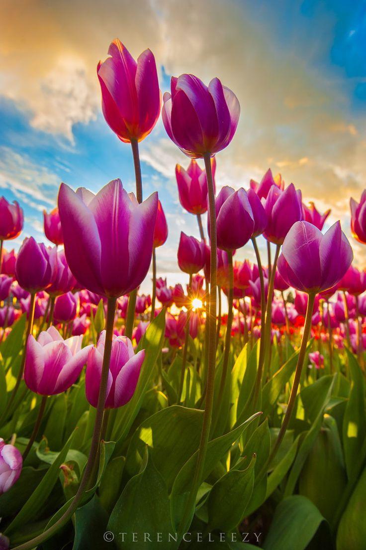 Tulip's 🌷 https://t.co/pnF0kIckKK
