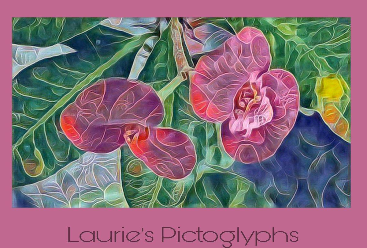 in the pink  patio flower - eclectic  #haiku #Digital-Art