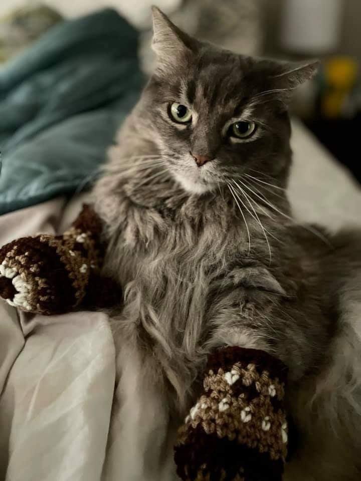 A kitten in (Bernie) mittens #berniesmittens 😂 @mdc_sanchez