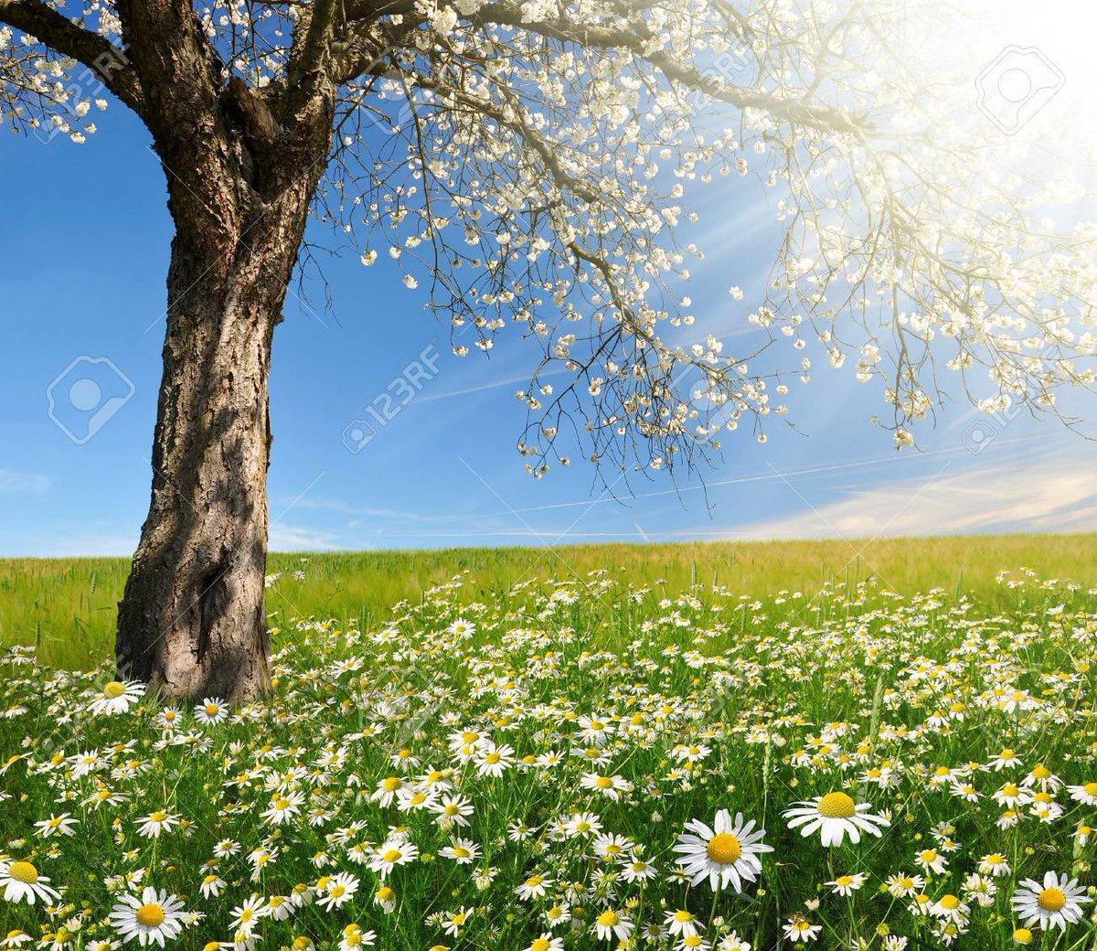 """Comencemos nuestro día con la oración, poniéndonos en la presencia de Dios:  Recemos con el Salmo 91: """"Es bueno dar gracias al Señor y tocar para tu nombre, oh Altísimo, proclamar por la mañana tu misericordia y de noche tu fidelidad"""" #Oracion #Cuaresma2021"""