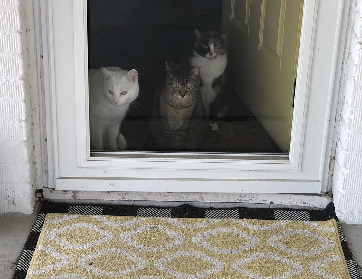@thechrisbarron Happy #Caturday from Roscoe, Trixie Belden and Dolly Parton, the apparent Gladys Kravitzes of the neighborhood.