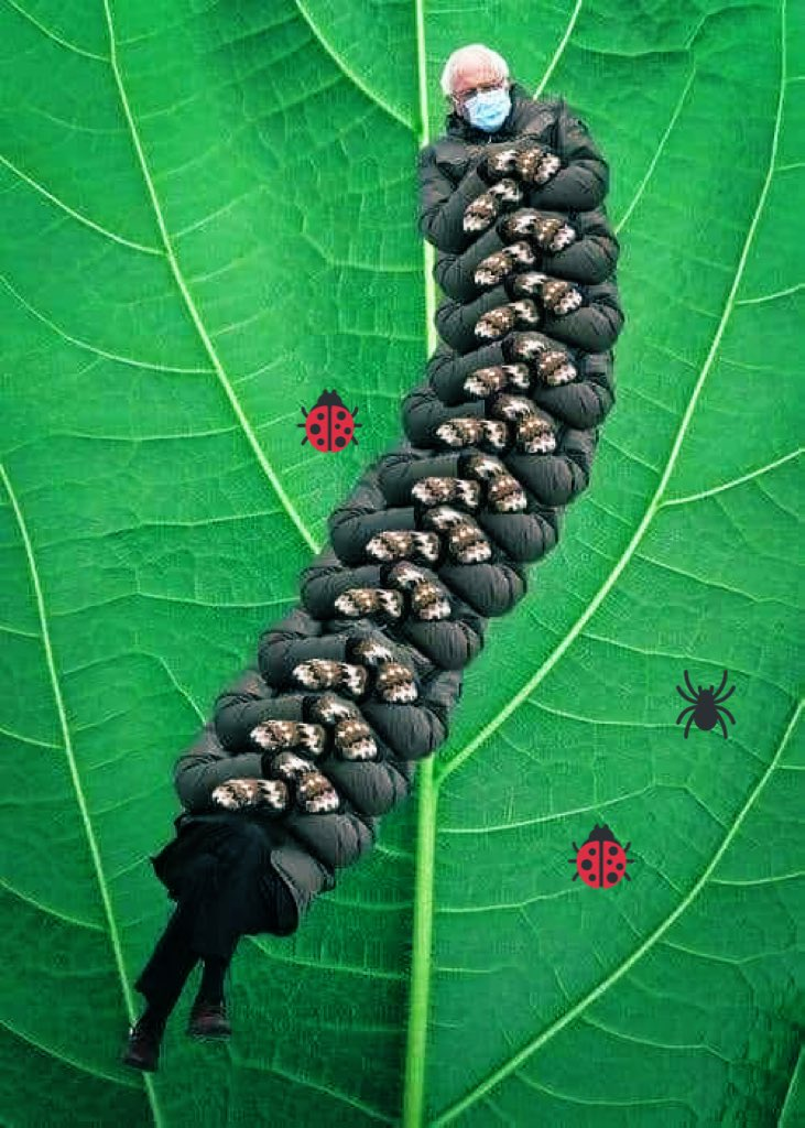 #spring is around the corner....spotted #bernepede in my garden🧐🐛 #sorry😂😂#Berniememes