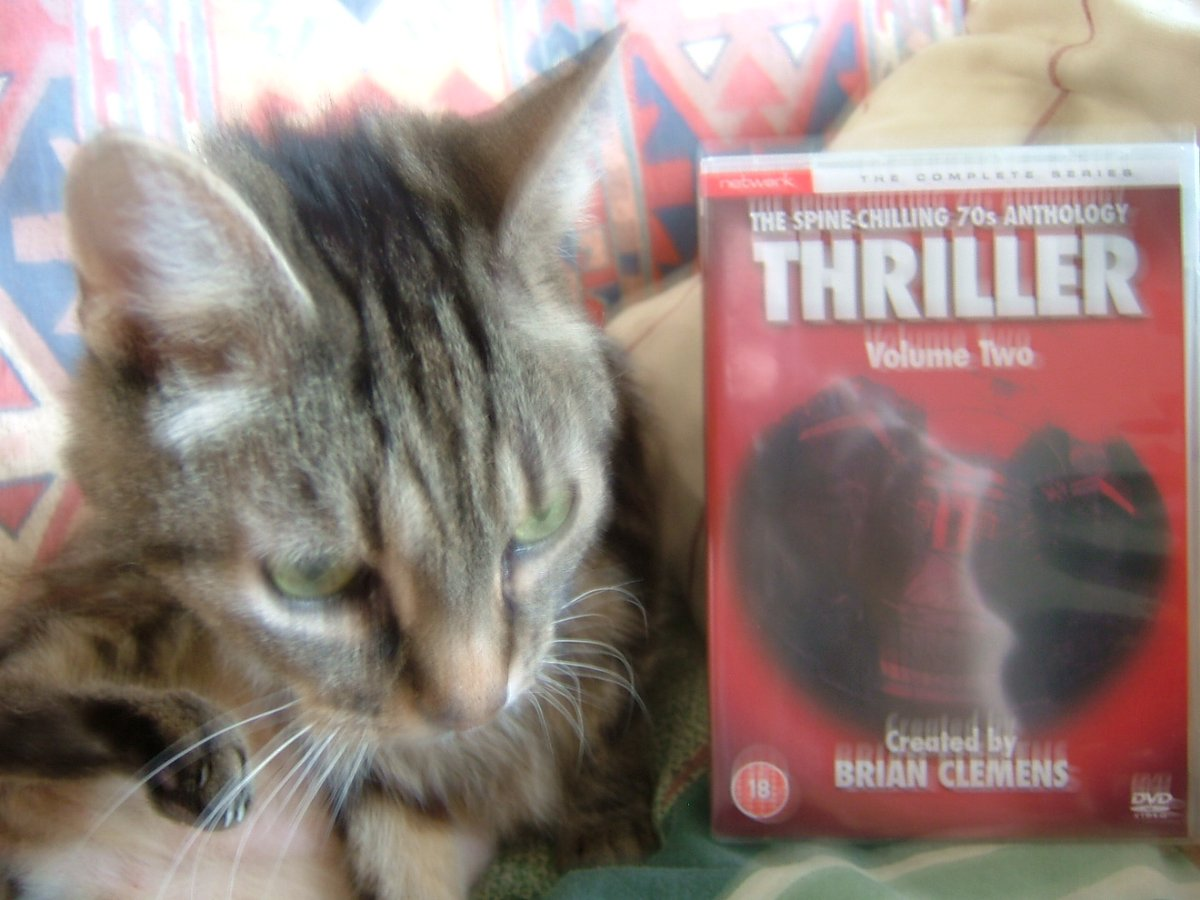 @Mollyfur is ready for #BrianClemensThriller at 8pm.  Well it is #Caturday .