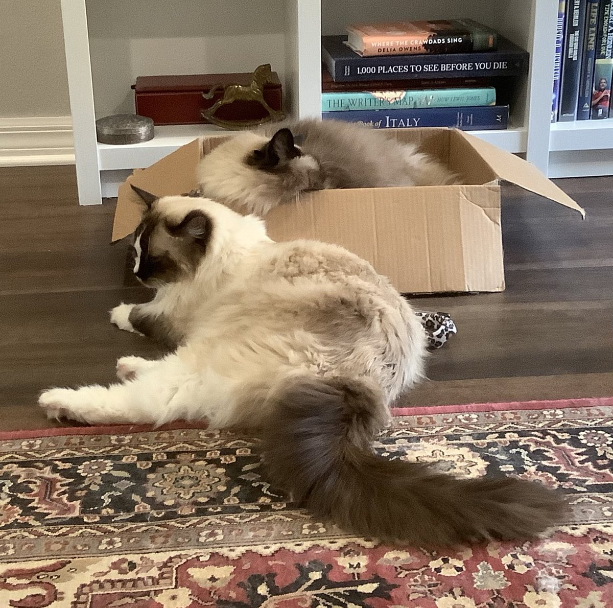 Happy #Caturday!   #BoxWars