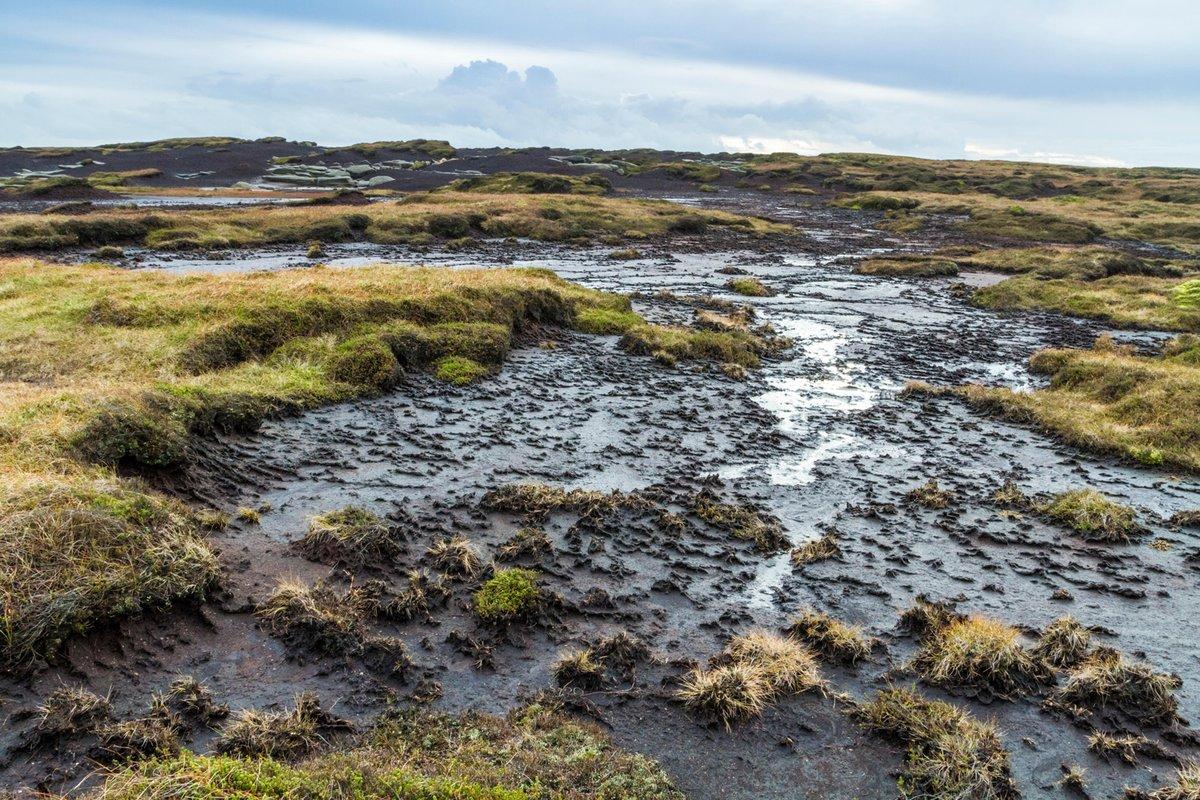 test Twitter Media - Guest post: How human activity threatens the world's carbon-rich peatlands   https://t.co/FM61BZYdGv #archive https://t.co/VTAWQI9LIb