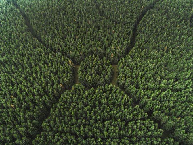 ¿Sabías que Atos inició su programa medioambiental en 2008? 🌱 Las emisiones absolutas de...