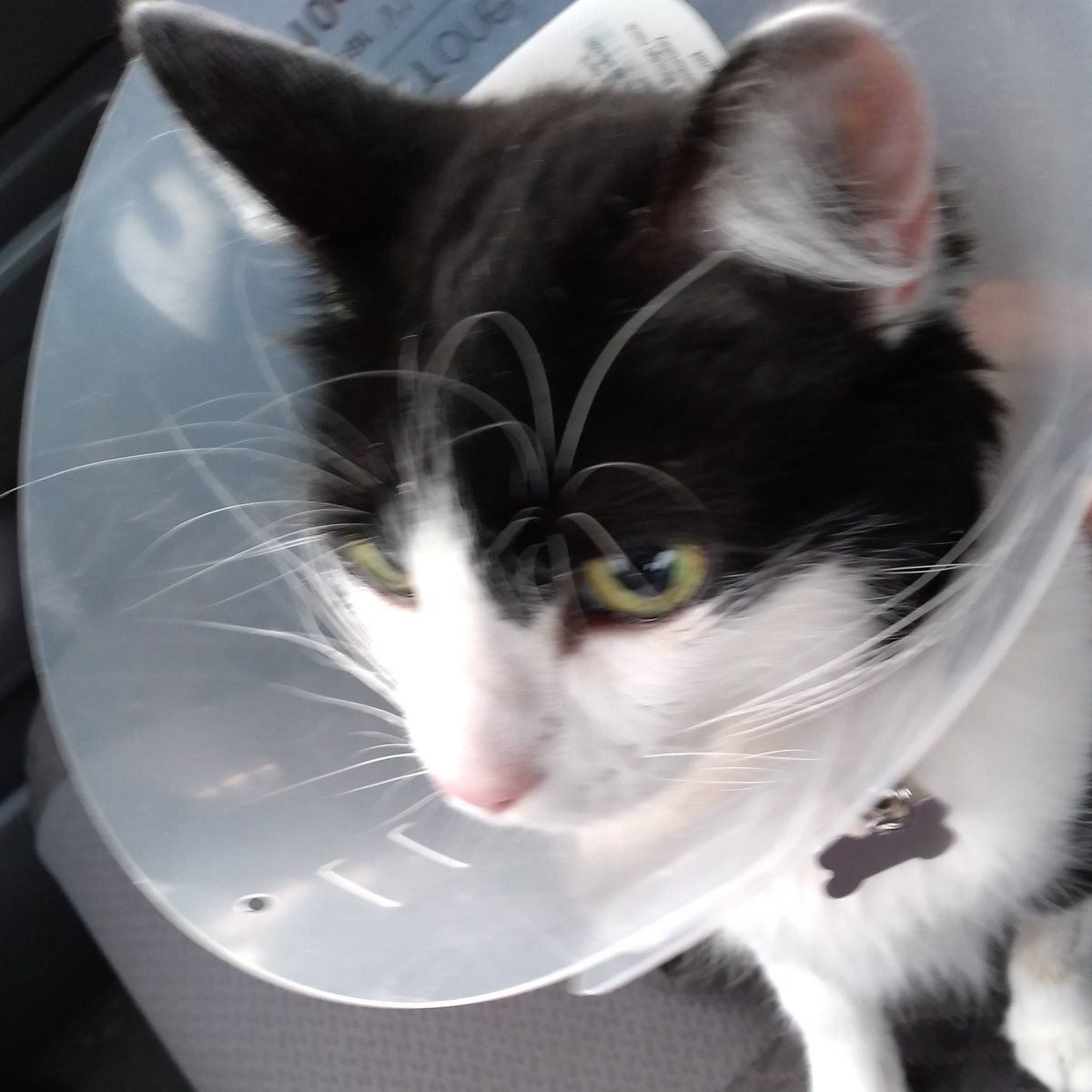Surgery went Well. She Had Many Globs Of Tumors On Her Uterus.😖.  #Happy #That #I #Spayed #Her #Before #Tumors #Got #Out #Of #Controlled #SpayAndNeuter #SpayAndNeuterYourPets #SpayedAndChipped #SpayAndNeuterSavesLives #Love #Your #Fur #Babies #AdoptAndShop