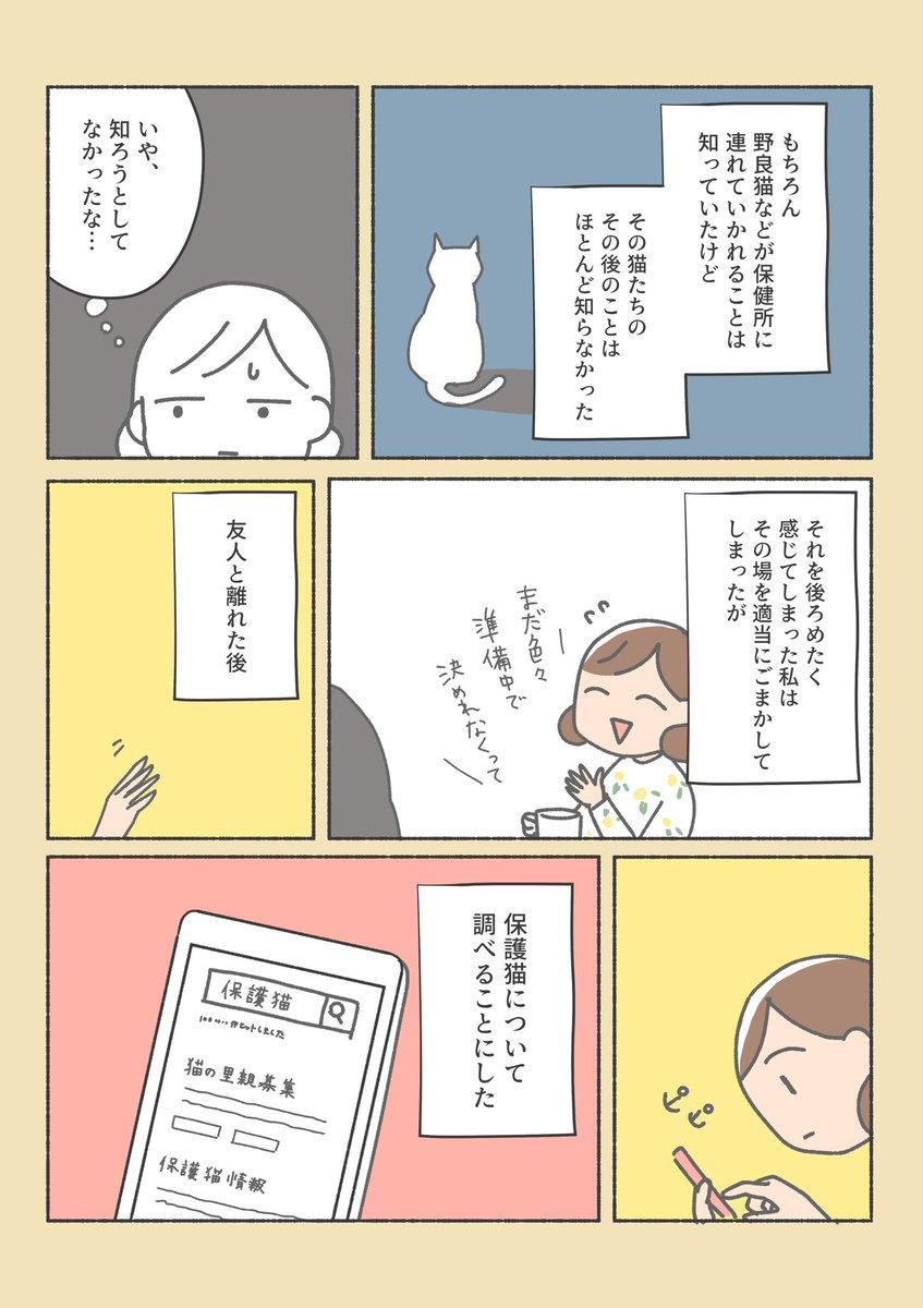 保護猫ちゃんをお家に迎えるまでの話 (1/12)