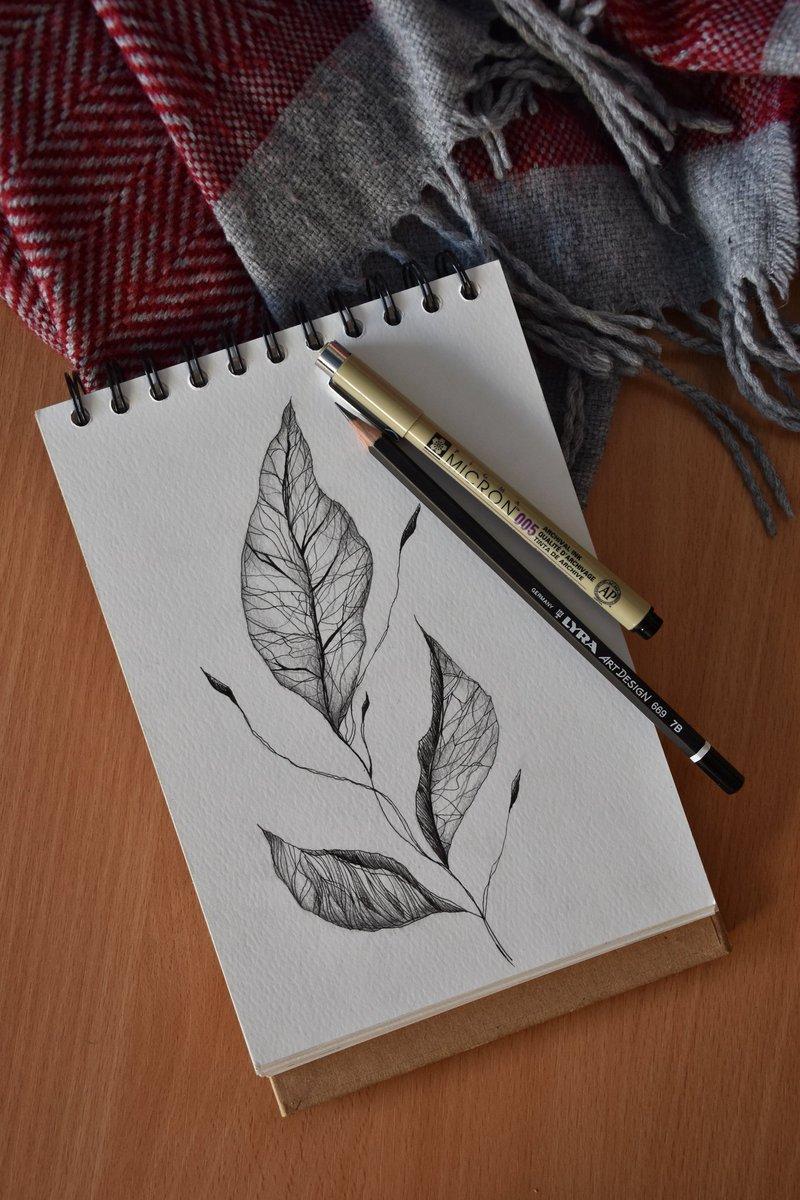 #plant #lineart #micronpen #dotart #sketch #inkart #art #graphic #graphicsdesign #artwork #drawing #blackandwhite #micron #leaves #floralart #artistontwitter #magyar #aesthetic #artistic #artsy #Zalaegerszeg