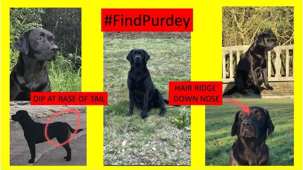 #FindPurdey  #CancerSupportDog   #female black #Labrador   #Stolen: 19/02/21  Area: #Billesdon #Leicestershire #LE7   To whoever has taken Purdey, you have broken the hearts of her family who have already been through so much. Please do the right thing and drop her off at a vets