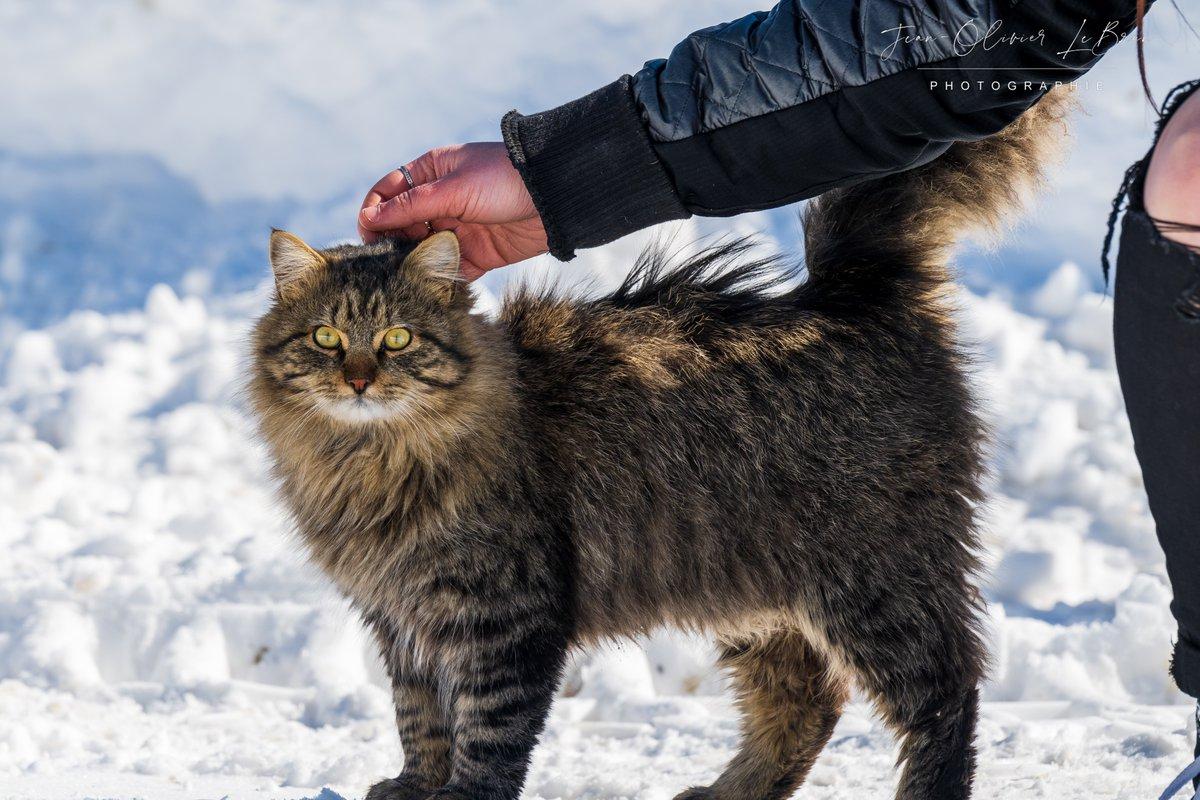rencontre québec chat)