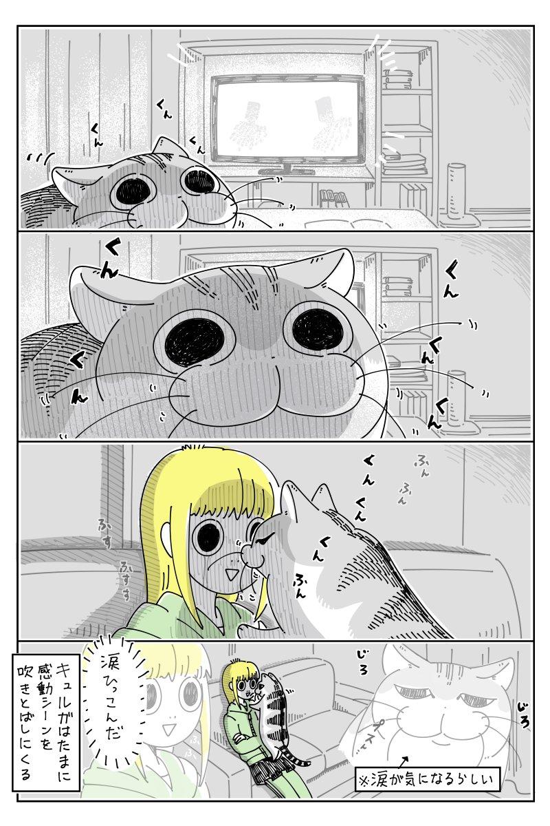 せっかくの感動シーンが!映画を観て涙を流しているところへ猫が近寄って来て・・・!